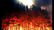 Disaster-Relief-Forest-Fire